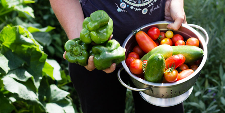 When To Harvest Your Vegetables Nursery Kart Online Plants India