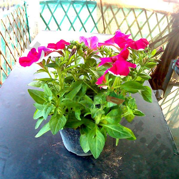 Buy Plants Seeds Pots Online At Nursery Kart Largest Plant Nursery In India Nurserykart In